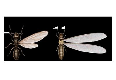 bed-bug-on-skin.jpg