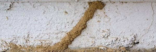 termite-tubes