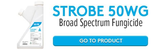 strobe-50wg-online