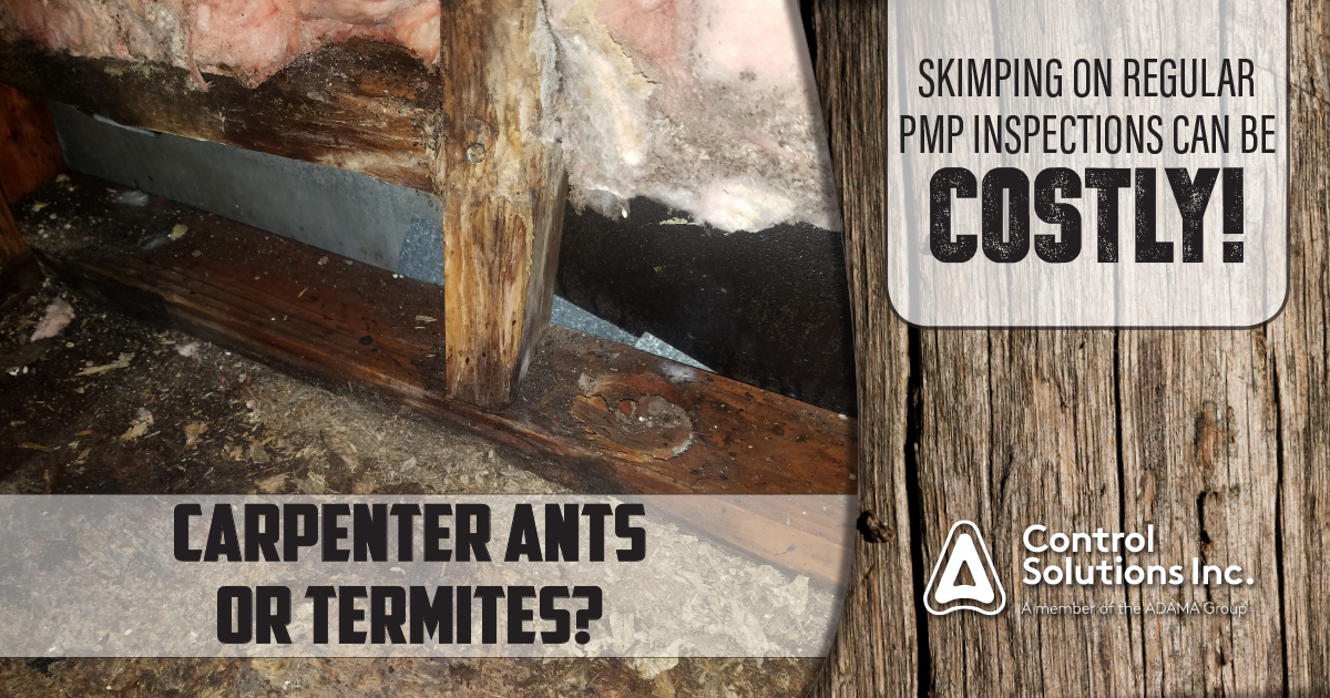 BLOG_HEADER.carpenter_ants.termites