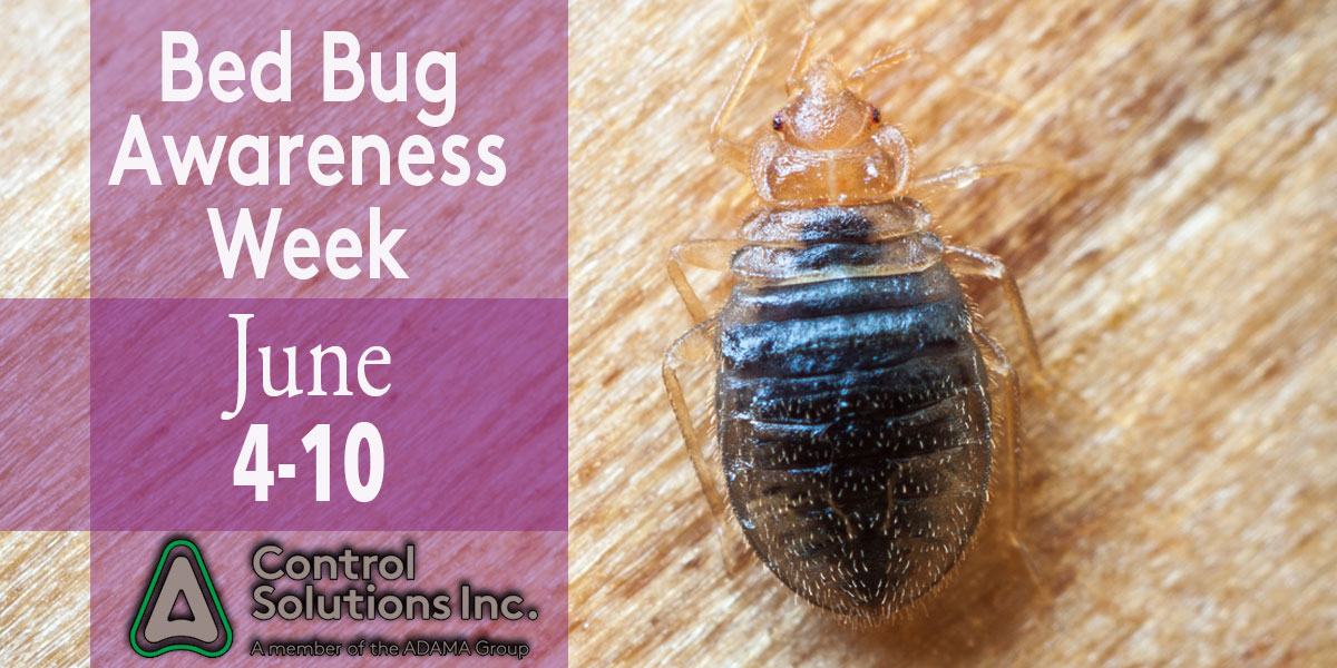 Bedbug_week_b.jpg