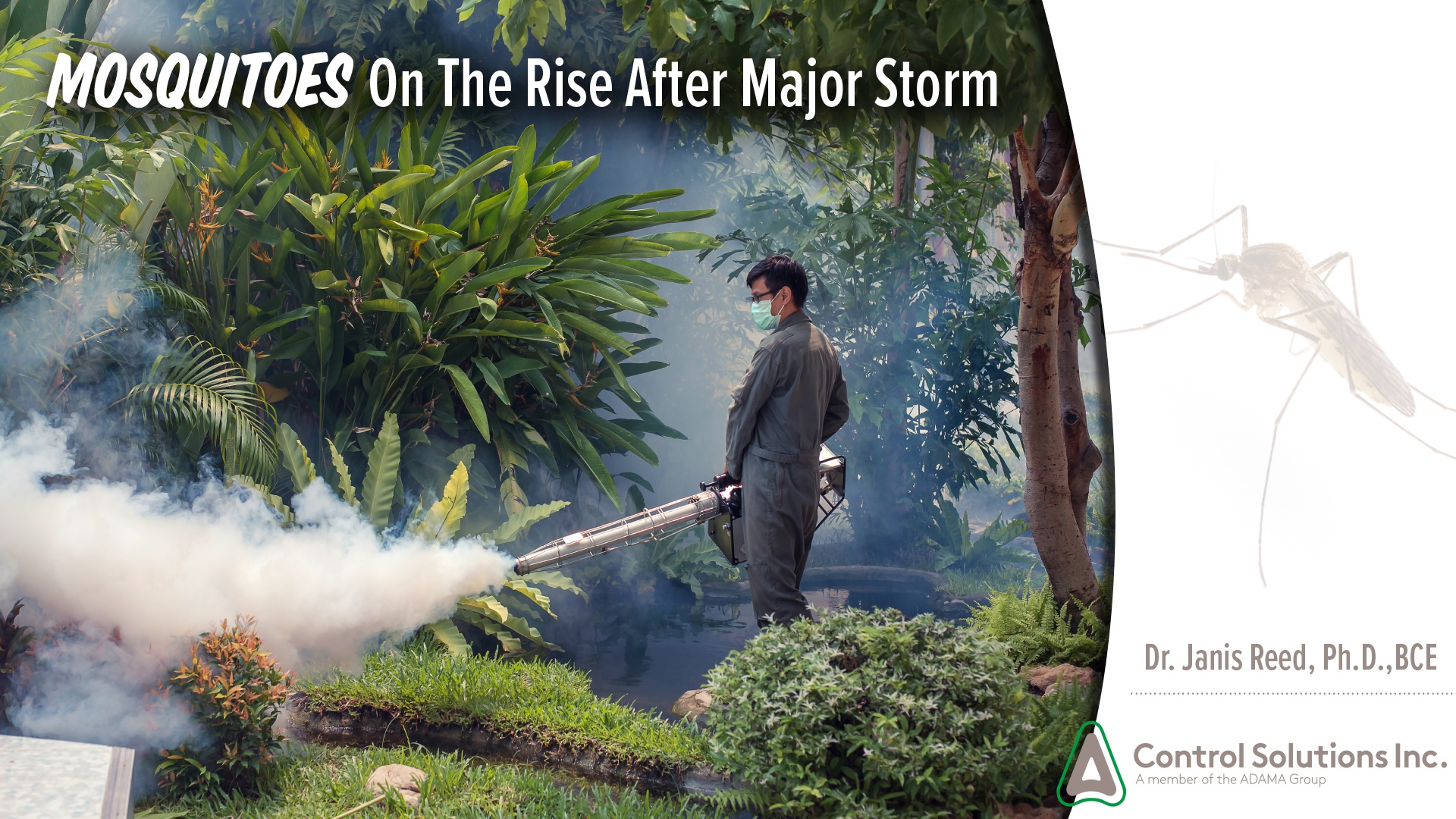 Mosquitoes_after_major_storms.jpg