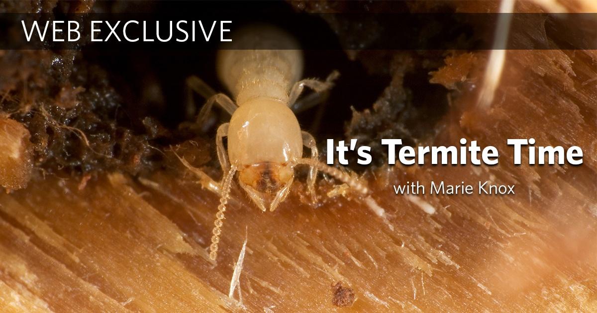 Termite Time.jpg
