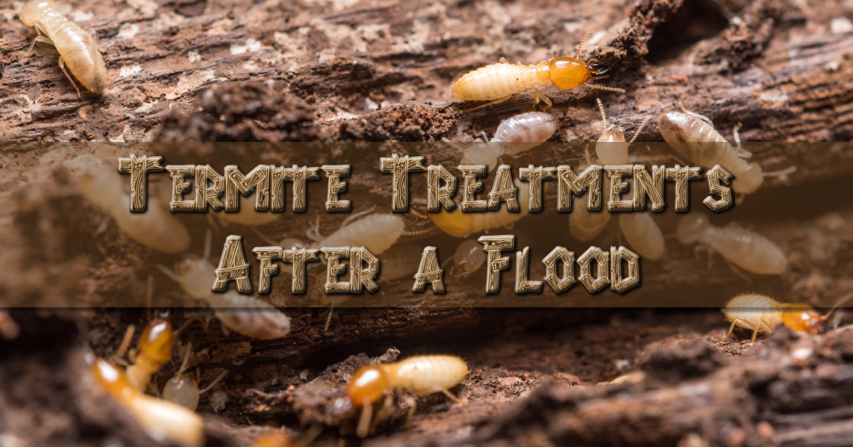Termite-Flood.png