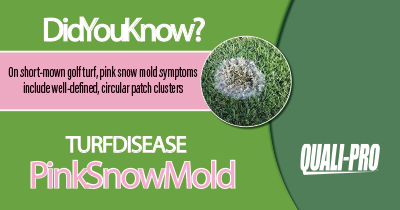 Pink Snow Mold Identification