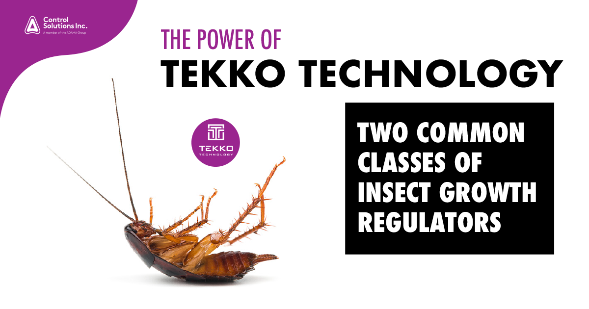 HEADER.TEKKO_the_power_of