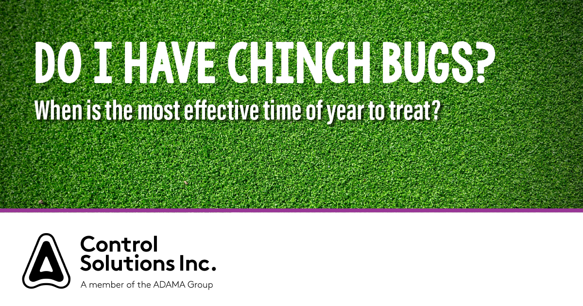 HEADER_Chinch_bugs