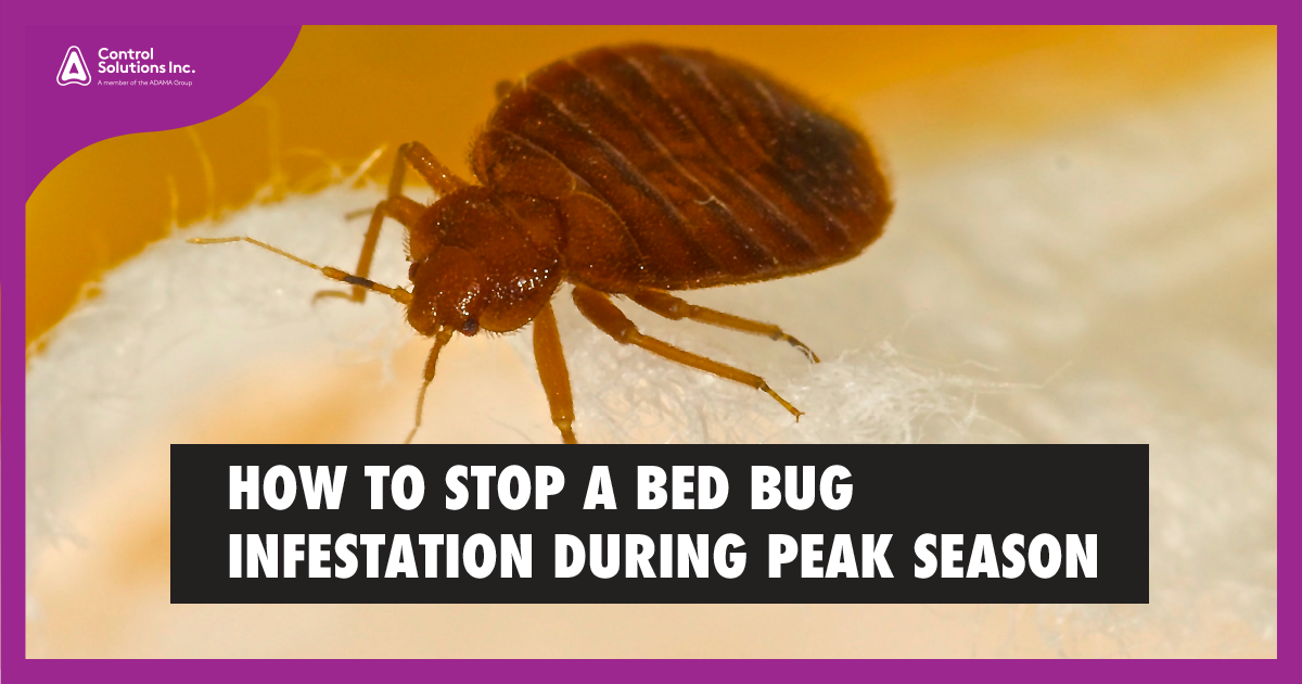 HEADER_HOW_TO_stopBB_infestation