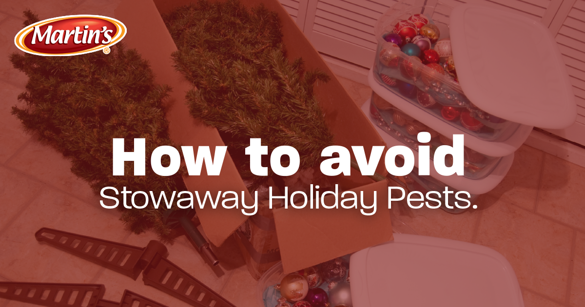 HEADER_holiday_pests
