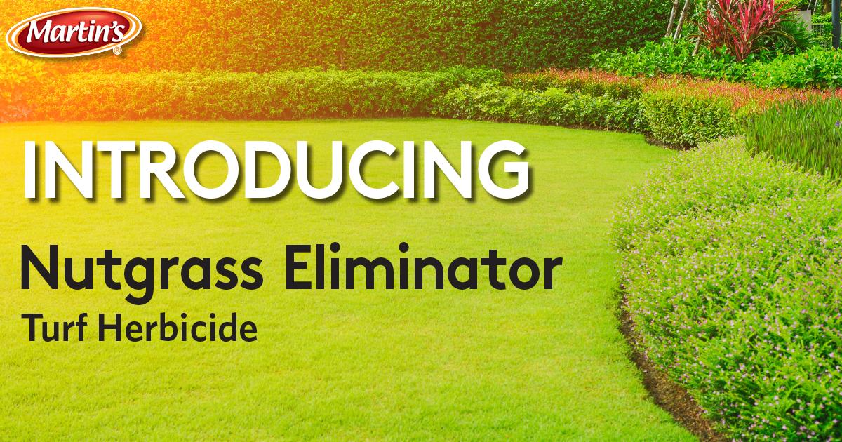 HEADERnutgrass-eliminator2