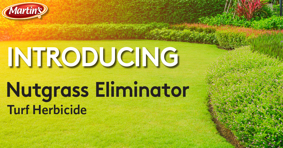 HEADERnutgrass-eliminator2