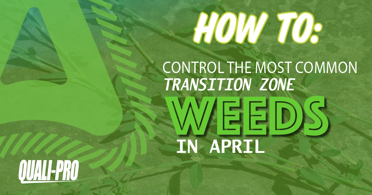 Transition_Zone_Weeds