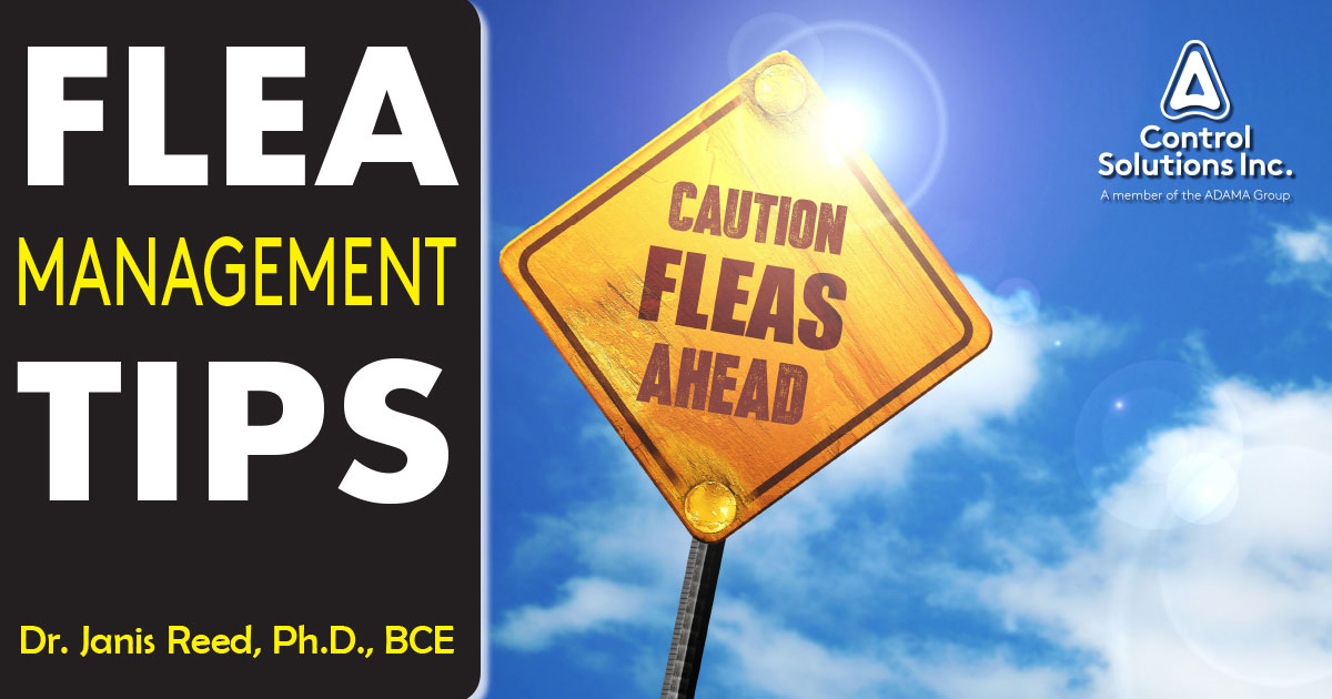 flea-management-tips-image
