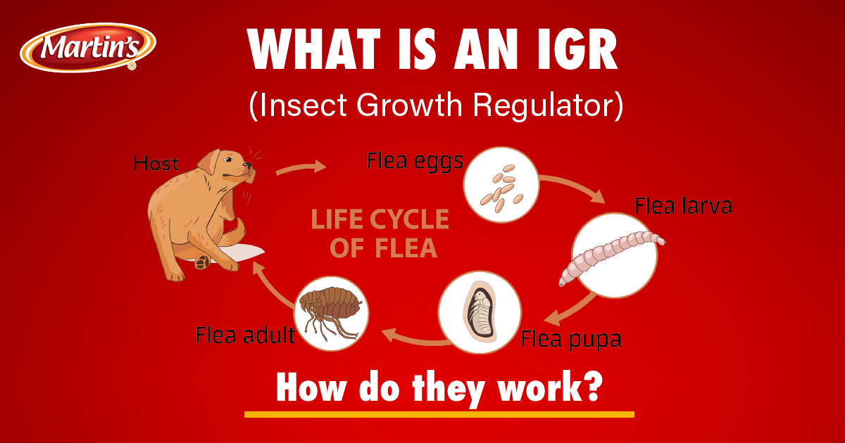 header_what_is_an_IGR_UPDATED